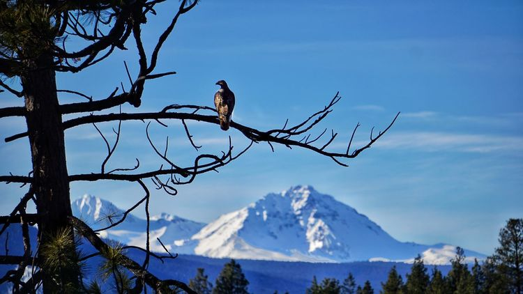 Showcase: January Bendoregon Inbend Northwest Mountains Birds