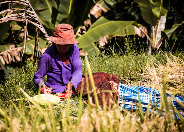 Bali, Indonesia Plant Grass One Person Field Real People Growth Nature Land Women Day Clothing Adult Selective Focus Hat Lifestyles Beauty In Nature Females Sunlight Working Outdoors Farmer Purple