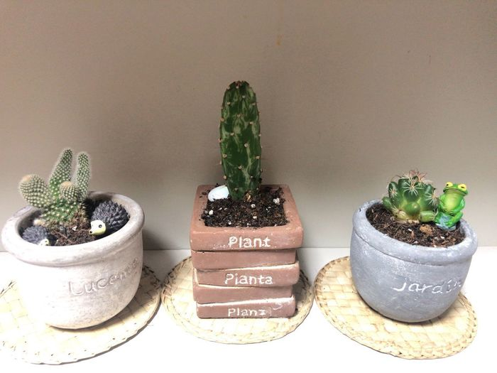 Potted Plant Plant Cactus Growth Indoors  Succulent Plant No People Wall - Building Feature Table Nature High Angle View Decoration Green Color Flower Pot Wood - Material Close-up Communication Freshness Text Thorn
