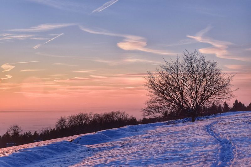 Bare Tree On Snow Covered Field Against Sky At Sunset