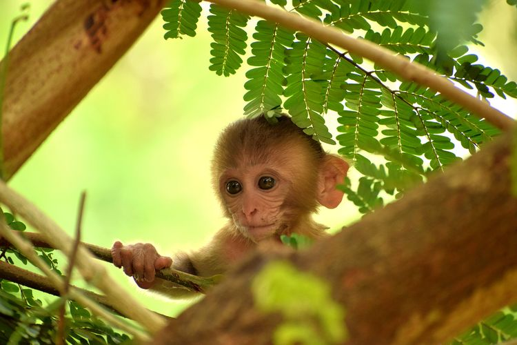 Portrait of monkey on tree