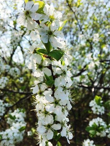 Bavaria Flower Only Flowers Germany Sun Summer Deutschland Schön Blume