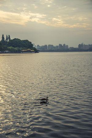 一大清早就出发,解放路上逛商家,逛累白堤往回走,平湖秋月喝喝茶。 Cloud - Sky Duck Hangzhou,China Sky Sunset The West Lake The West Lake Water