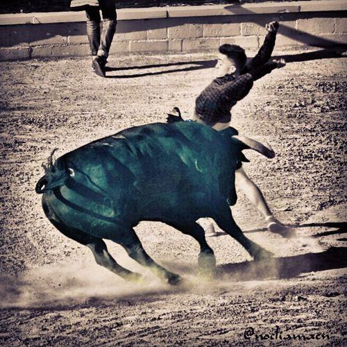 Nikon D3100 Medina Del Campo Toro De La Feria Arte Del Recorte