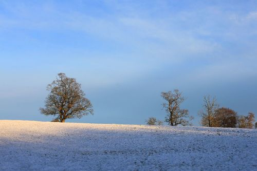 Snowy Trees Snow ❄ Snowy Snowscape Rural Fields Tree And Sky Tree Silhouette Lights And Shadows Showcase: February 43 Golden Moments