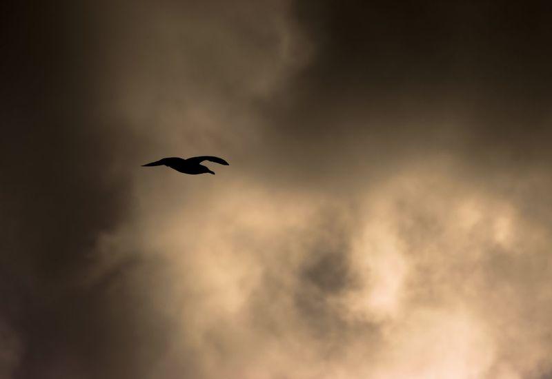 """Bad dreams"" Nightmare Sky Clouds And Sky Bird Bird Photography Nikon Nikond3300"