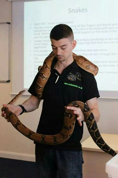 Boa Constrictor Snake Reptile Snake Scales Teaching