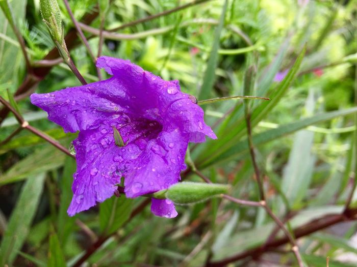 Purple flower Flower Fragility Drop Nature Growth Wet Beauty In Nature Flower Head Petal Day Purple Water Close-up Focus On Foreground Outdoors Freshness No People RainDrop Plant