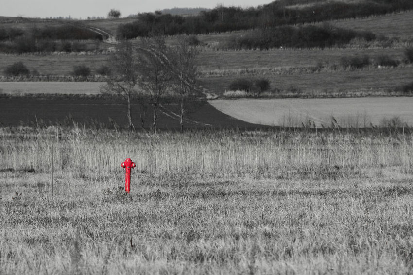 Hydrant Red Bielawa Bw Day Environment Field Grass Land Landscape Leisure Activity Nature Plant Red Color Scenics - Nature Side View Standing Standpipe Tranquil Scene Tranquility