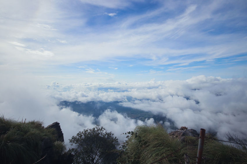 Chiang Rai Chiang Rai, Thailand Sun Rise Beauty In Nature Cloud - Sky Day Environment Growth Idyllic Landscape Low Angle View Mist Mountain Nature No People Non-urban Scene Outdoors Phucheefah Plant Scenics - Nature Sea Of Mist Sky Tranquil Scene Tranquility Tree