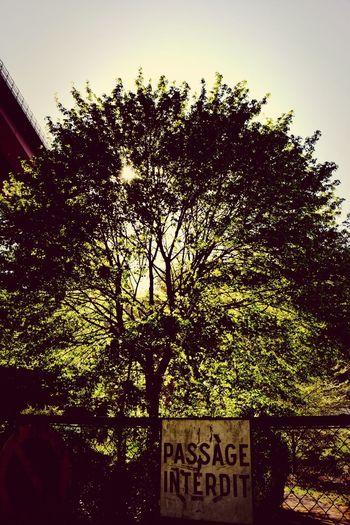 Tree Redbridge