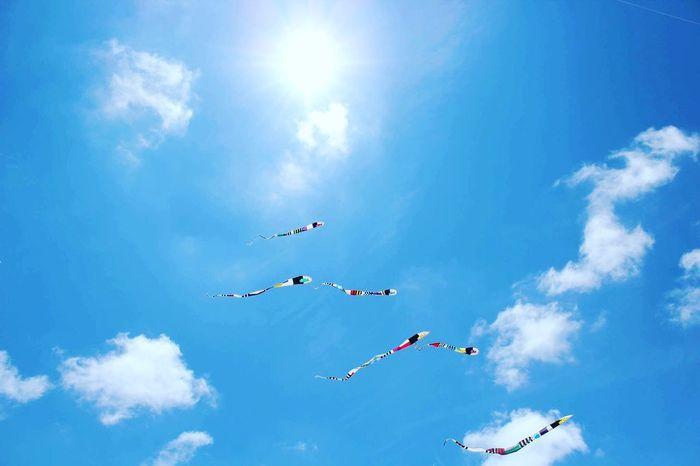 Vendée Cerf Volant Notredamedemonts Sky Skyporn Sun Soleil
