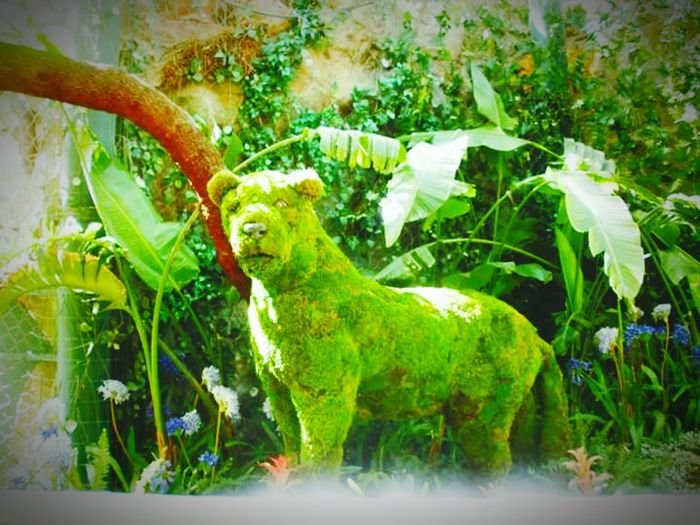 Green Color Animal Themes No People Tree Outdoors Water Day Feline Shrubb
