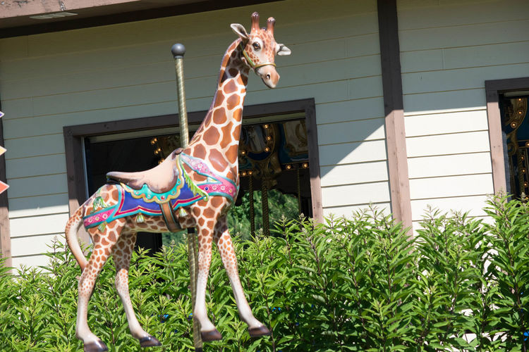 Amusment Animal Themes Architecture Building Exterior Built Structure Carosel Carousel Day Domestic Animals Front Or Back Yard Full Length Mammal No People One Animal Outdoors Ride
