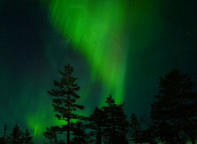 Astronomy Aurora Aurora Polaris Beauty In Nature Galaxy Green Color Illuminated Kittilä Landscape Low Angle View Nature Night No People Outdoors Scenics Sky Star - Space Tranquil Scene Tranquility Tree
