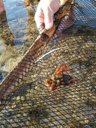 Octopus Seacreatures Life Wonderment Loveforlife Net Catch Eyeem Philippines