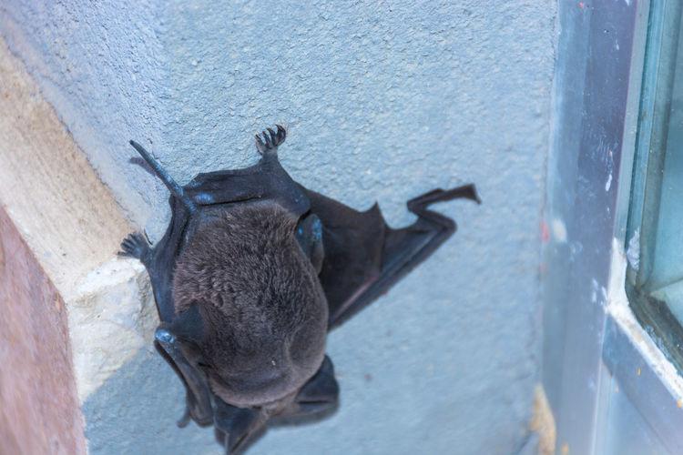 Animal Head  Animal Themes Animal Wildlife Animals In The Wild Bat - Animal Bat Aera Bat Cave Bat Eared Fox Bat House Bat Yam Close-up Day Mammal Nature No People One Animal Outdoors Sleeping Sleeping Bats Sleeping Time