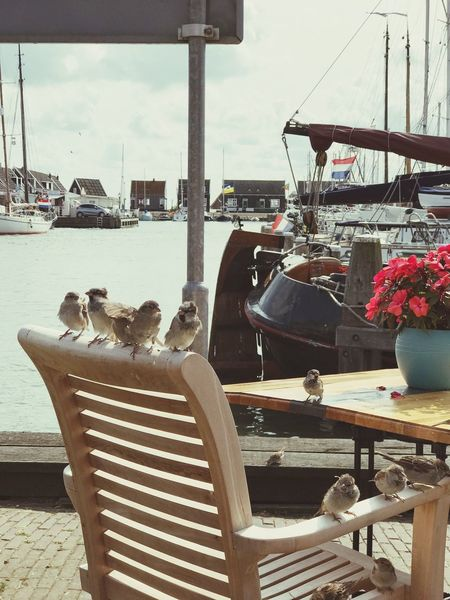 Birds visiting Flowers Birds Architecture Seat Table Chair Nature Transportation Water Day Sky No People Nautical Vessel Restaurant