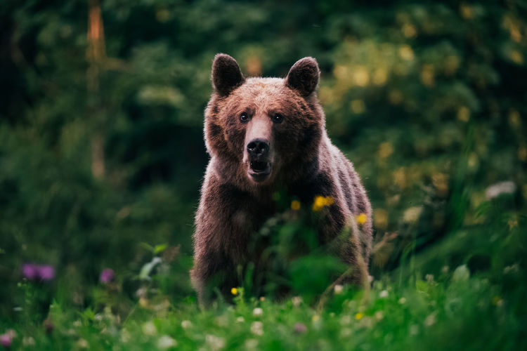Portrait of bear in forest