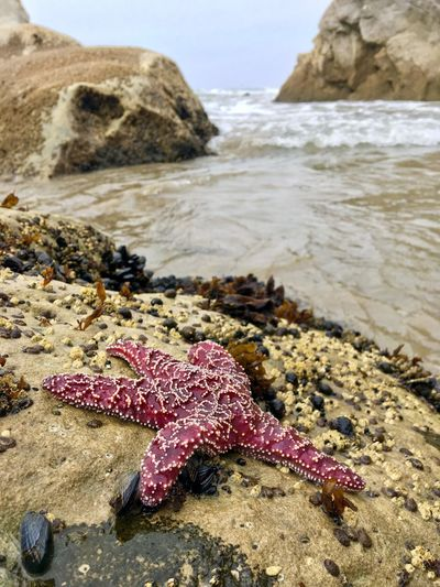 Live for the Story Taking Photos Enjoying Life Beach Land Sea Sand Water Nature Beauty In Nature Rock Starfish  Outdoors Tranquility Scenics - Nature Marine