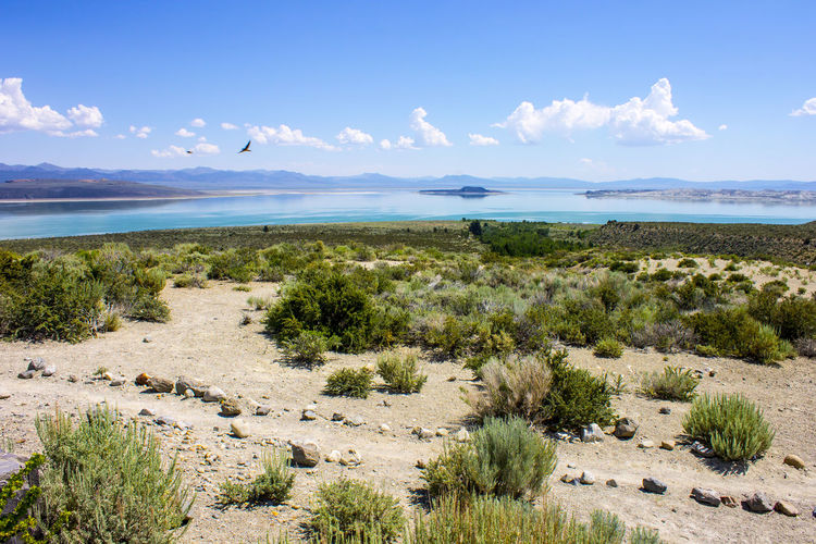 Mono Lake, a large, shallow saline soda lake in Mono County, California, with tufa rock formations Beauty In Nature Blue Cloud - Sky Day Grass Growth Horizon Over Water Lake Landscape Mono Lake Mono Lake California Nature No People Outdoors Plant Scenics Sea Sky Tranquil Scene Tranquility Tree Tufa Water