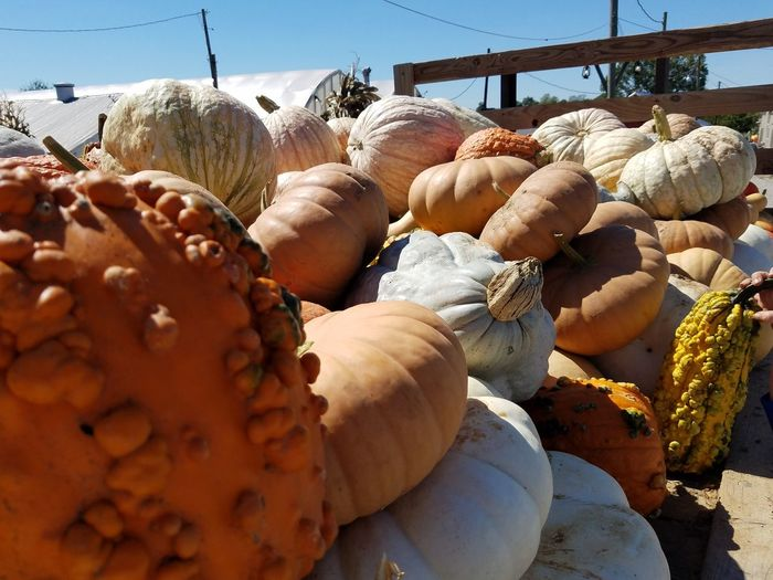 Food Fall_collection Eye4photography  EyeEm Best Shots - Nature Week On Eyem Fall Beauty Pumpkin Season Pumpkins Galore Pumpkin!Pumpkin! Autumn Collection Freshness Nature Eye4photography  Freshness