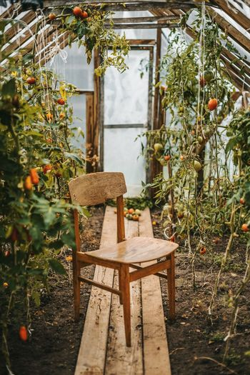 Chair In Greenhouse