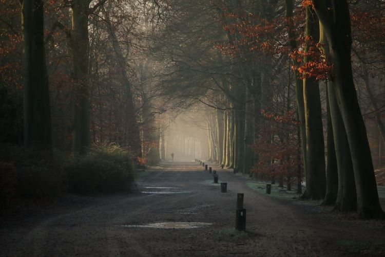 Nature Outdoors Forest Beauty In Nature Cold Temperature Capture The Moment Nature_collection Power In Nature EyeEm Nature Lover Eye4photography  Soul Searching Mist Hazy  Woods Nature_perfection Soulseeker Canon EOS 70D Canon ForTheLoveOfNature Atwork Working Canonphotography The Way Forward Pathway Hilversum
