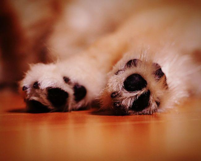 Low Section Of Dog Legs On Hardwood Floor