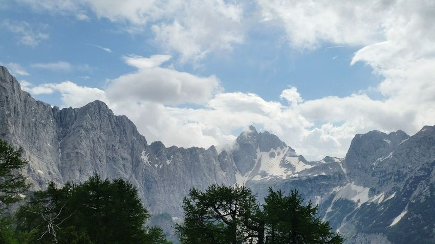 EyeEm Selects Tree Mountain Forest Pinaceae Pine Tree Sky Cloud - Sky Mountain Range