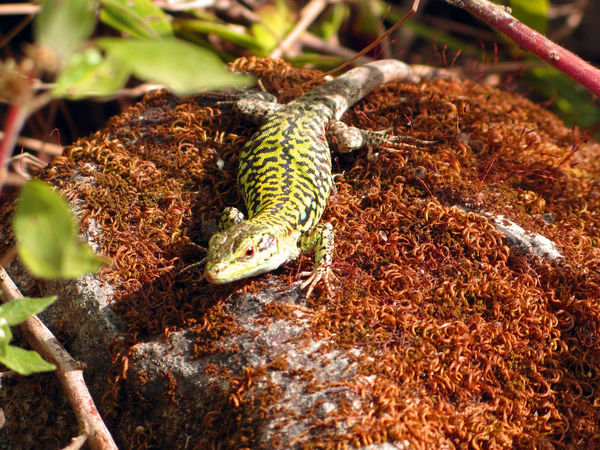 Animal Themes Animals In The Wild Detail Natural Pattern No People One Animal Reptile Wallpaper Wildlife Zoology