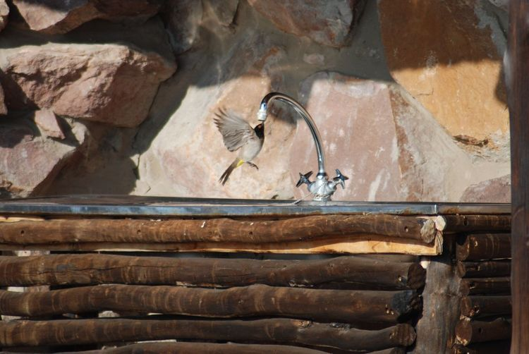 Close-up of birds drinking water from a tap