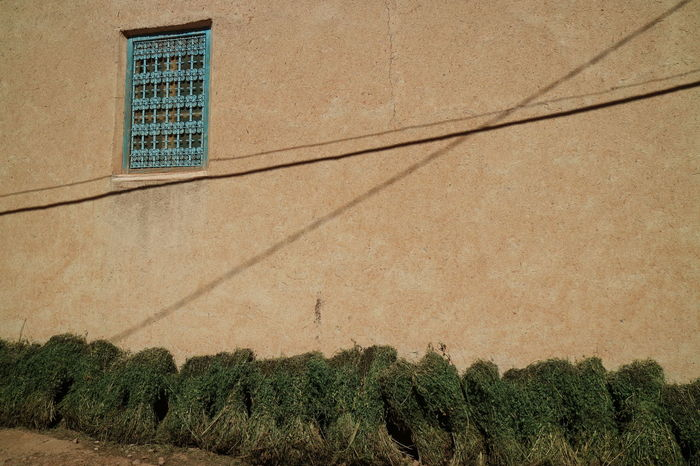 Morocco Mint Fresh Mint Oasis Todra Travel Travel Photography Wall Window Crossing Lines
