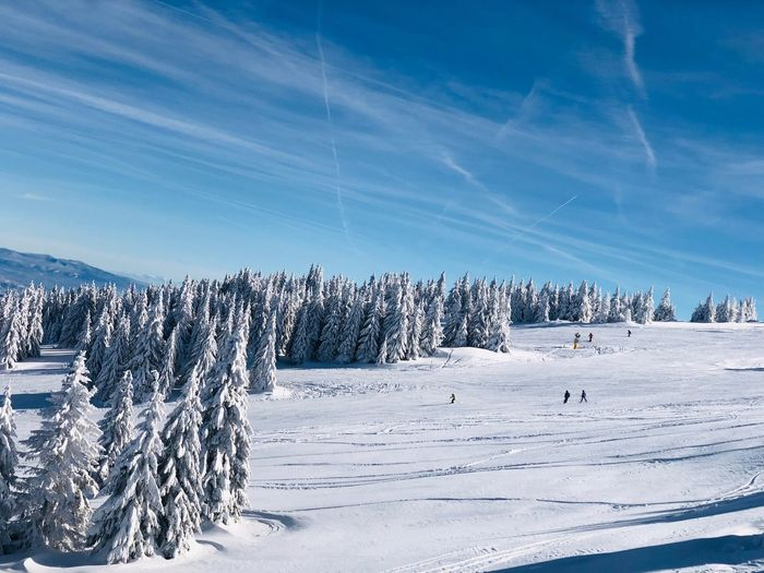 Forest of conifer trees covered in snow on a day with clear blue sky Nature Sunny Blue Sky Skiing People Silhouette Slope Outdoors Frozen Mountain WoodLand Woods Evergreen Tree Pine Tree Forest Snow Winter Cold Temperature Sky Scenics - Nature Beauty In Nature Landscape Environment Tranquility Tranquil Scene Coniferous Tree Tree Non-urban Scene White Color Day