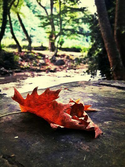 Sonbahar gelmiş gibi....