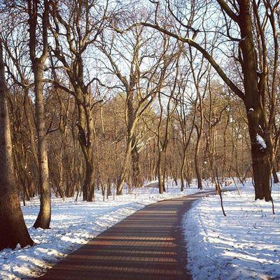 Сегодня без зайцев сырец зима дневник_наблюдателя Syrets winter insta_kiev