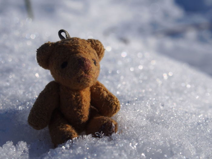 Teddy Bear Toy Stuffed Toy Childhood Softness Representation Animal Representation Nature Close-up Indoors  Day Winter Single Object Selective Focus Snow Cold Temperature Innocence