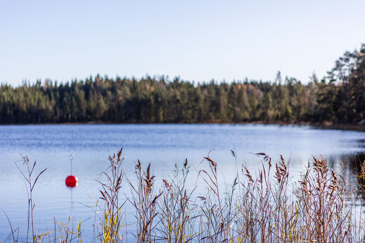 Autumn Beauty In Nature Day Focus On Foreground Forest Lake Nature No People Outdoors Selective Focus Sweden Water