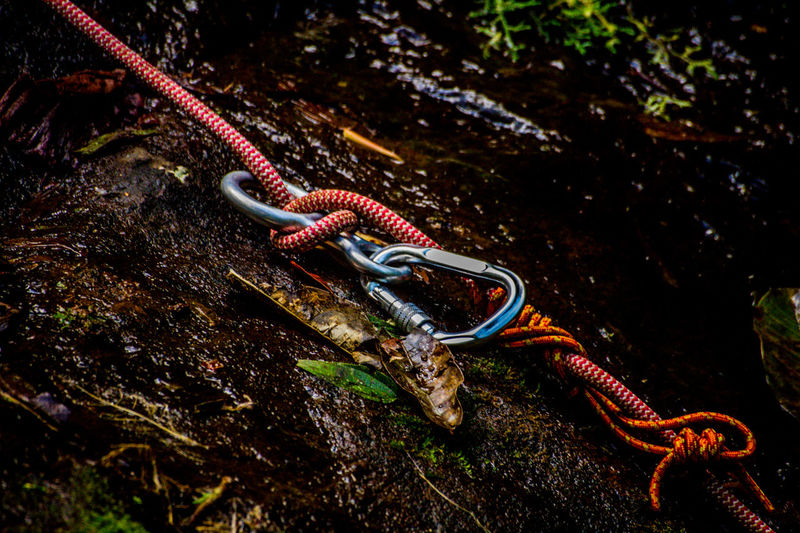 Ecoturismo Meleiro, Brazil Animal Themes Animal Wildlife Animals In The Wild Beauty In Nature Close-up Day Ecoturism Nature No People One Animal Outdoors Reptile Rock - Object Ropes Sea Life UnderSea Water