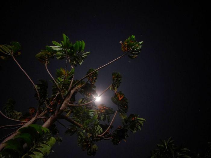 Tree Night Nature Outdoors Tree Area Black Background Moonlight Star