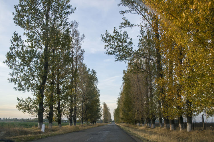 Autumn Beauty In Nature Day Diminishing Perspective Growth Landscape Nature No People Outdoors Road Scenics Sky The Way Forward Tranquil Scene Tranquility Transportation Tree