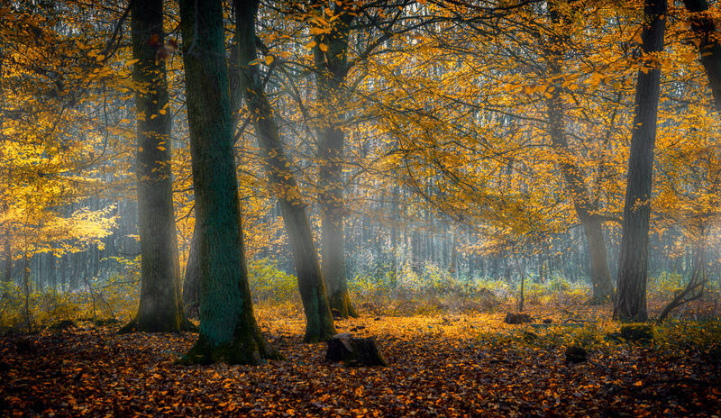 Woodland Autumn Autumn Colors Branches Fog Foliage Forest Leaves Mist Nature No People Sun Trees WoodLand