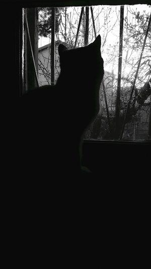 Silhouette_collection Monochrome Photography Window Indoors  Silhouette Animal Themes Light And Darkness  Blackandwhite Photography Eyeemphotography Asus Zenfone Photography Showcase March EyeEm Nature Lover Harusphotos Photooftheday OpenEditCreativ Nature_perfection Cats 🐱 Nekos :3 Beautiful <3 Relaxing @ Home Neko Kittens Of Eyeem
