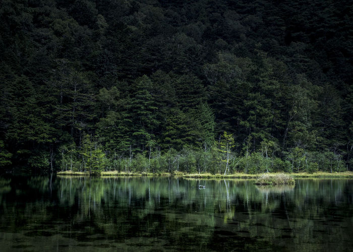 Japan Japan Photography Beauty In Nature Forest Idyllic Japanese Painting Lake Land Mishagaike Nature No People Non-urban Scene Outdoors Plant Reflection Reflection Lake Scenics - Nature Suwa Tranquil Scene Tranquility Tree Water Waterfront WoodLand EyeEmNewHere