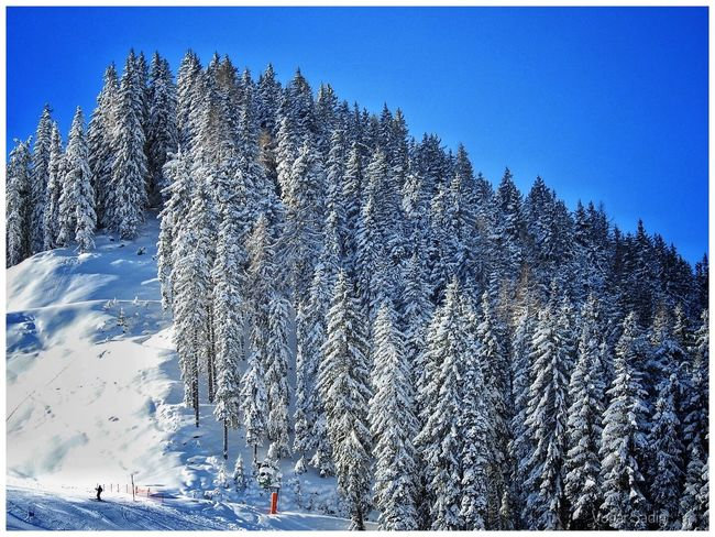 Beauty In Nature Clear Sky Cold Temperature Day Mountain Nature No People Outdoors Scenics Sky Snow Tranquil Scene Tranquility Tree Winter