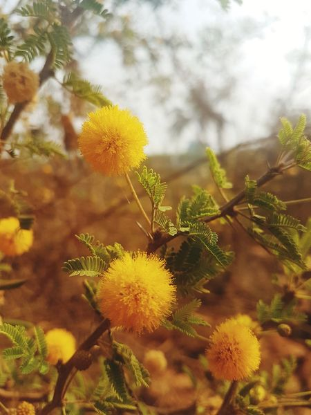 Nature Plant Growth Outdoors Beauty In Nature No People Day Close-up Freshness Tree Flower Sky