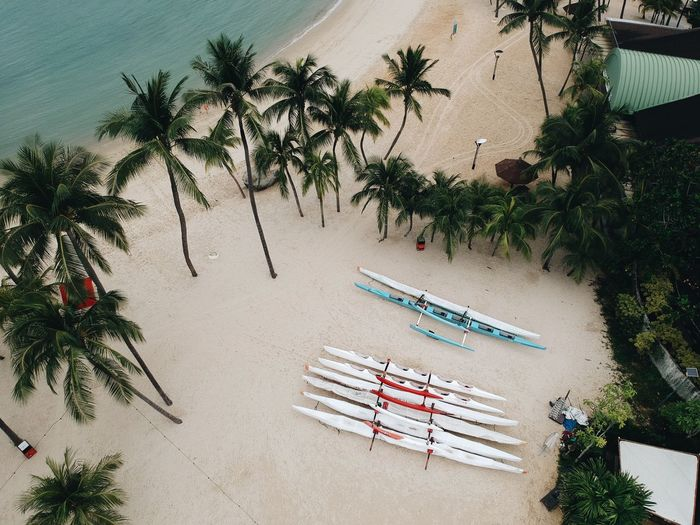 High angle view of palm trees on beach