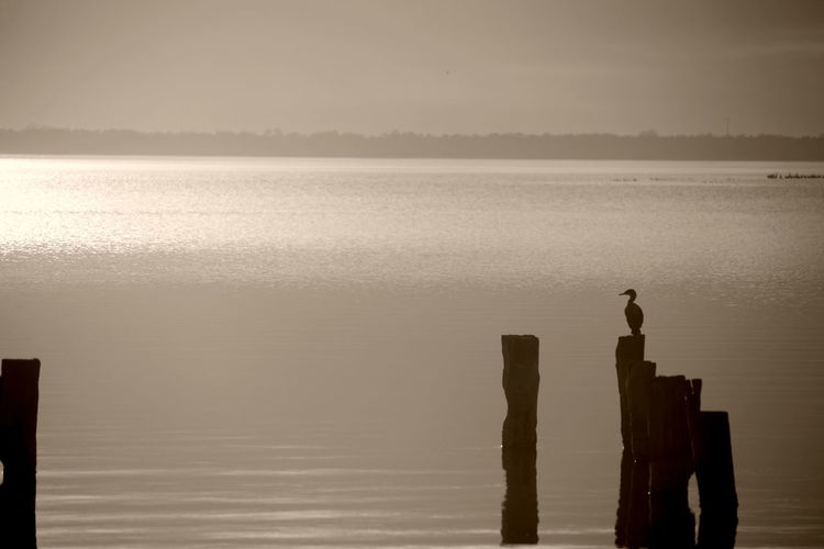Beauty In Nature Bird On Piling Day Nature No People Outdoors Scenics Sky Sunset Tranquility Water