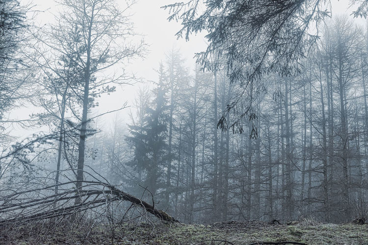 Fallen Tree Trees Cold Look Day Defolaged Trees No People No Sunshine Wintery Forest Tree Forest Nature Beauty In Nature Bare Tree Tranquility Fog Branch Tranquil Scene Winter Outdoors Landscape Tree Trunk Low Angle View Scenics Cold Temperature Sky