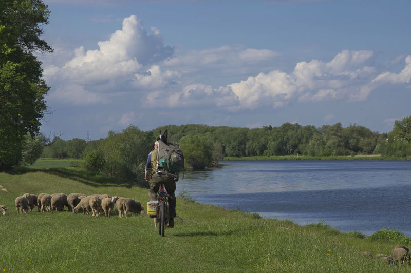 a summer landscape with an angler, a herd of sheep and a lazily flowing river Outdoors Field Full Length Day One Person Domestic Vertebrate Water Livestock Real People Tree Domestic Animals Nature Land Cloud - Sky Sky Animal Animal Themes Grass Plant Sheep Angler River Herd Opole EyeEmNewHere